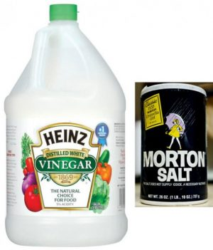 vinegar plus salt weed killer