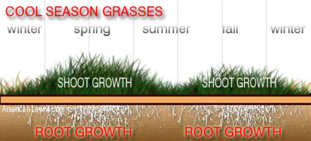 coll season grasses