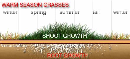 warm season grasses