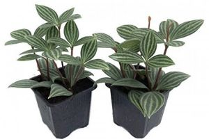 we take a look at the best indoor plants