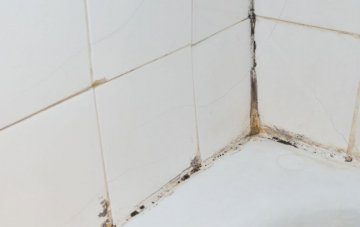 The Danger Of Mold For Your Health And How To Get Rid Of It
