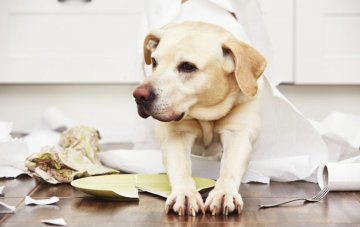 How to Dog Proof Your Home And Avoid Puppy Disasters