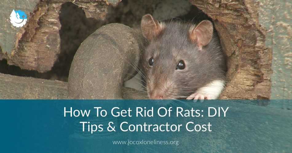 How To Get Rid Of Rats: DIY Tips & Contractor Cost | ContractorCulture