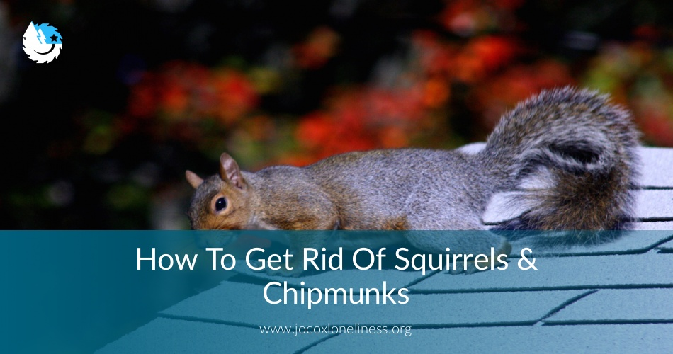 How To Get Rid Of Squirrels Amp Chipmunks Guide