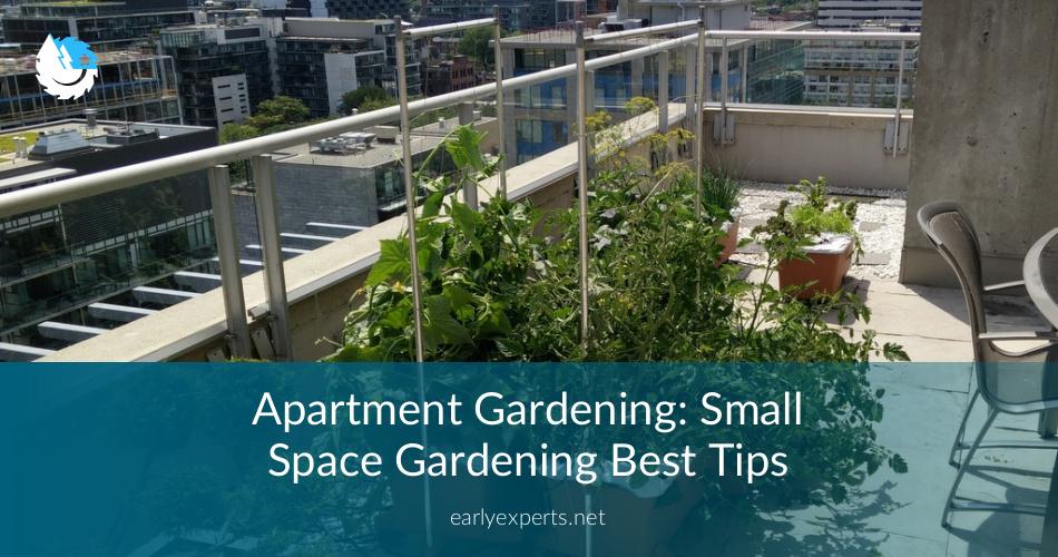 Apartment Gardening: Small Space Gardening Tips ...