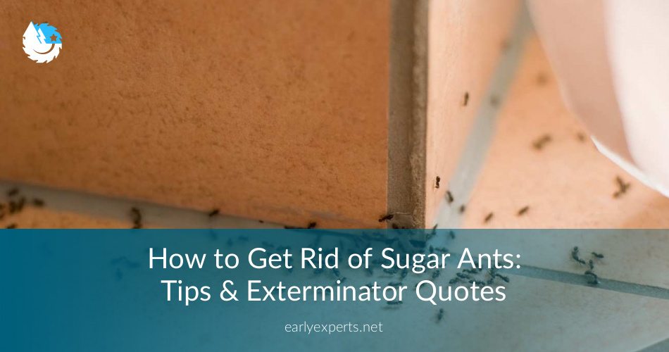 How To Get Rid Of Sugar Ants Guide 2019 N Jocoxloneliness